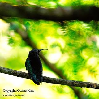 bird-photography-tips