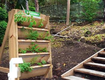 hotel guest herb garden