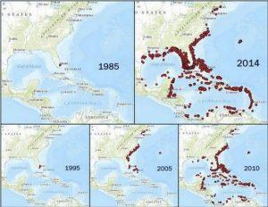 lionfish invasive area
