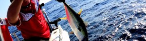 local fishing guide st lucia