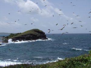 maria island bird santuary st lucia
