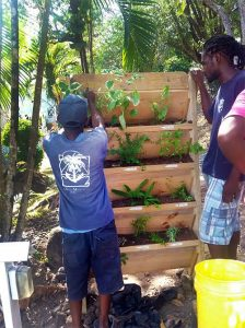 planting herb garden for guests hotel st lucia