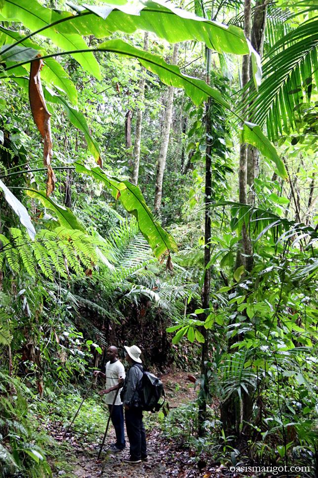 rainforest-jungle-tour-st-lucia
