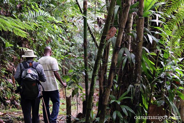 rainforest-tour-st-lucia