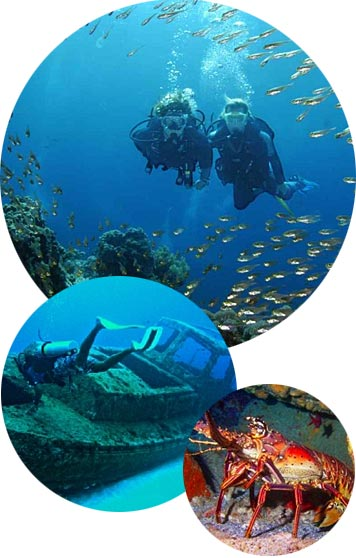 St. Lucia Scuba Diving Adventures