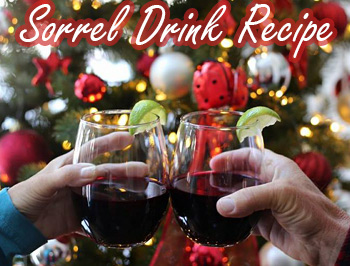 Sorrel Drink Recipe – A Caribbean Christmas Tradition!