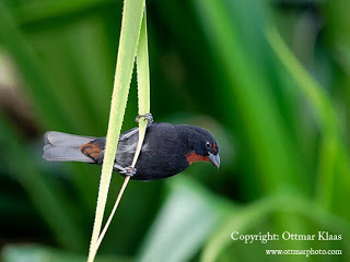 st-lucia-bird-watching